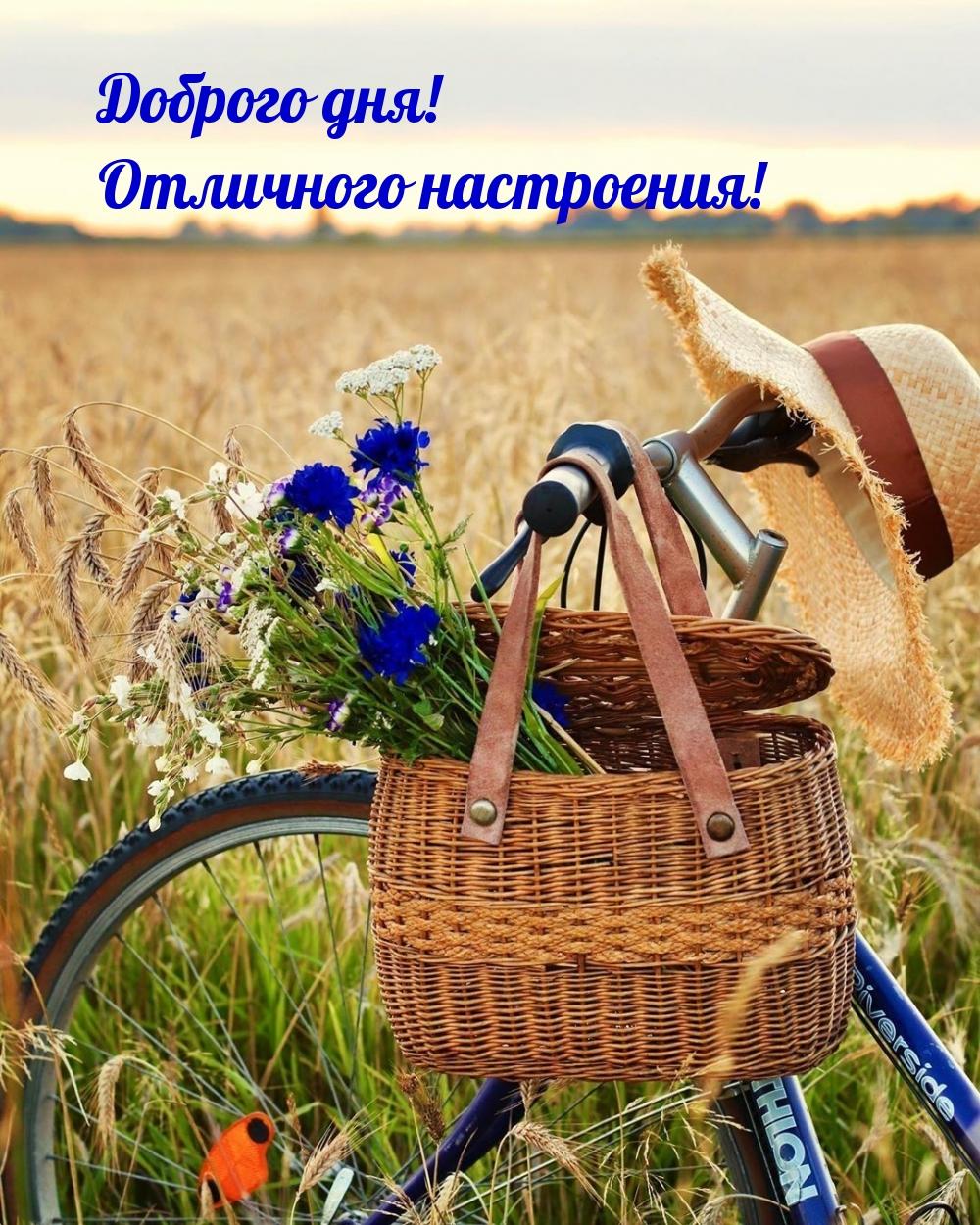 Доброго дня! Отличного настроения!