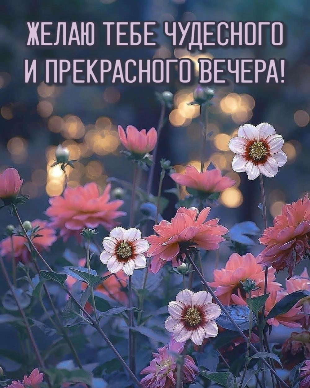 Желаю тебе чудесного и прекрасного вечера!