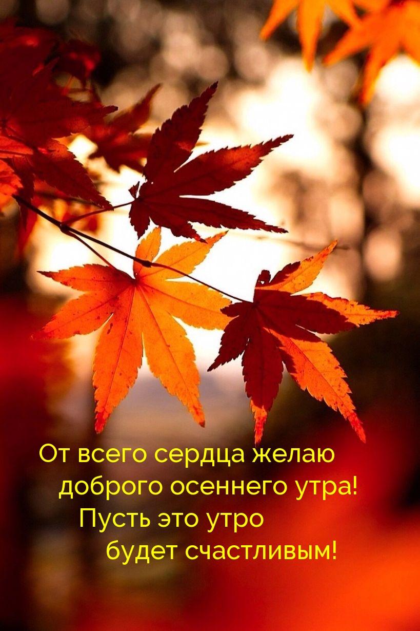 От всего сердца желаю доброго осеннего утра!