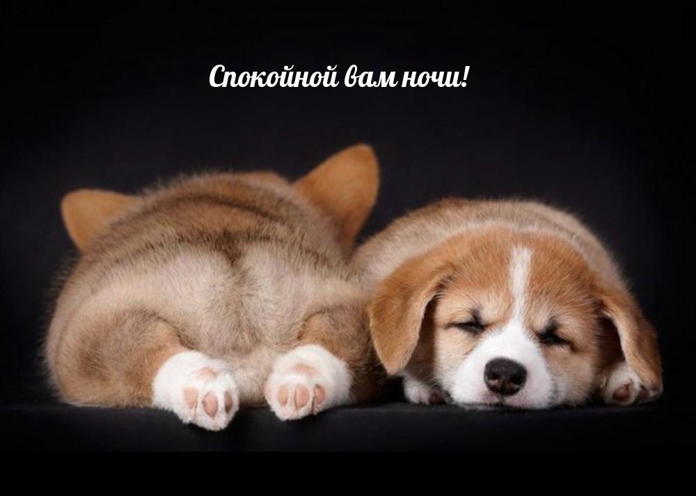 Спокойной вам ночи!