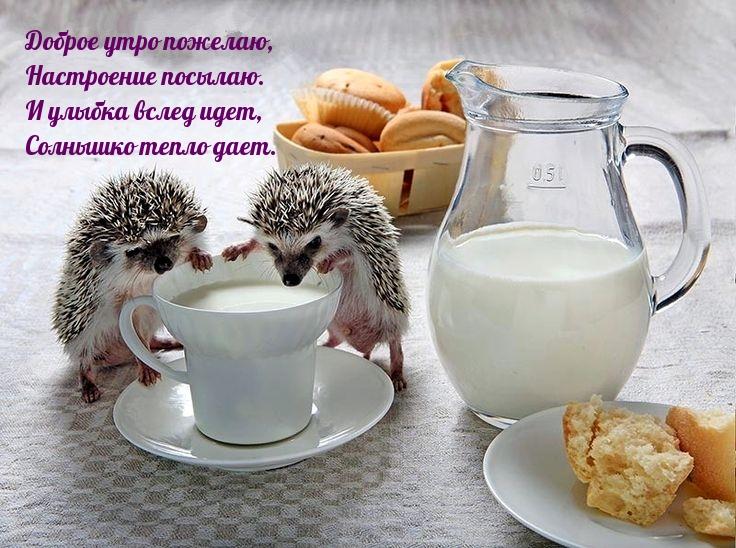 Доброе утро пожелаю, настроение посылаю