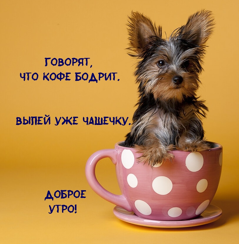 Говорят, что кофе бодрит. Выпей уже чашечку)