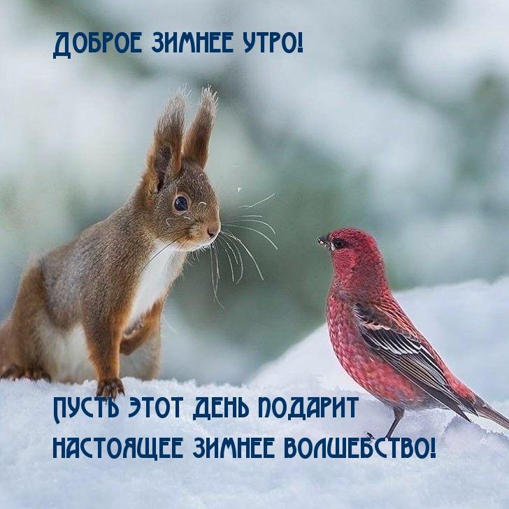 Доброе зимнее утро!  Волшебства!