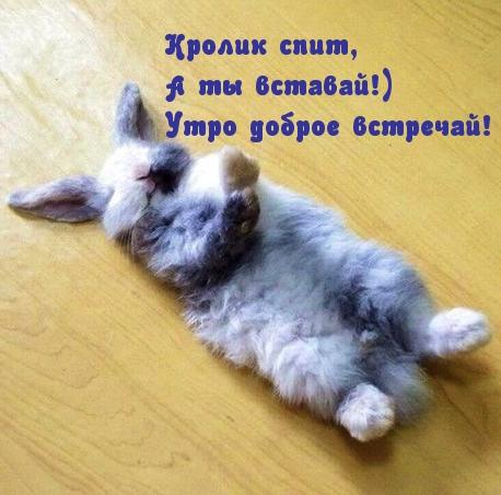 Кролик спит, А ты вставай!) Утро доброе встречай!