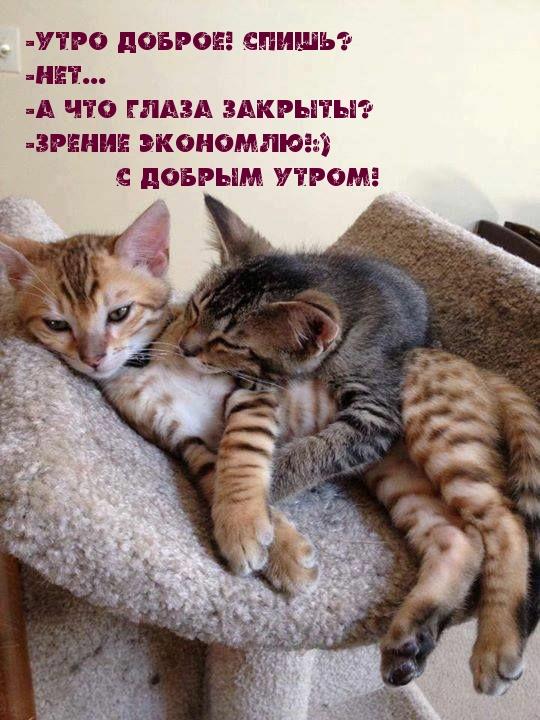 -Утро доброе! Спишь? -Нет... -А что глаза закрыты?