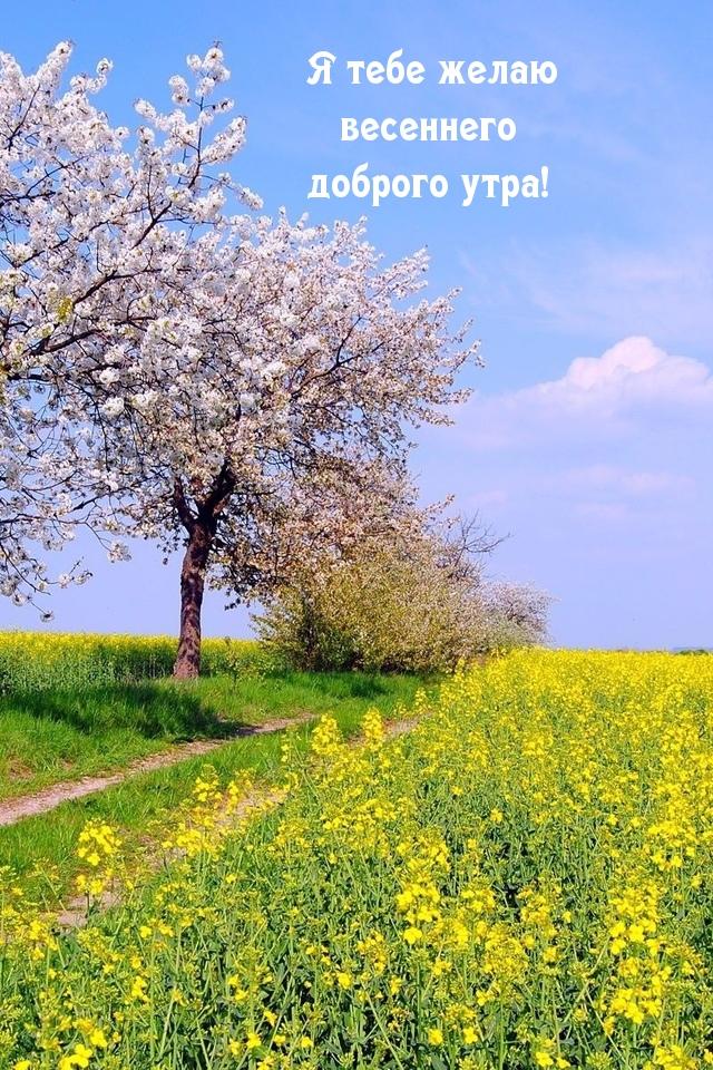 Я тебе желаю весеннего доброго утра!