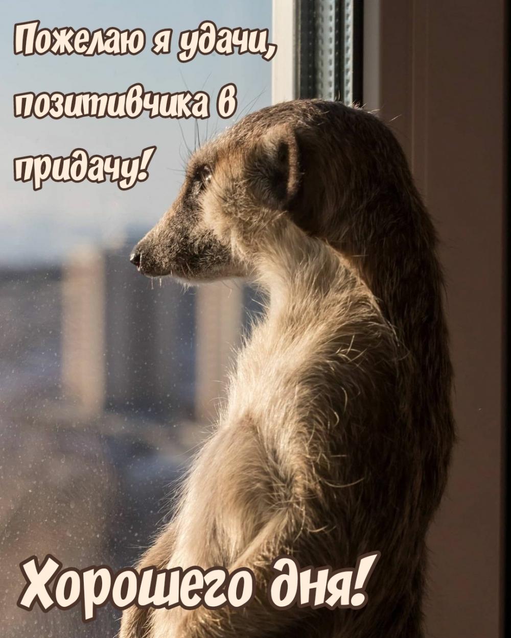 Пожелаю я удачи, позитивчика в придачу! Хорошего дня!
