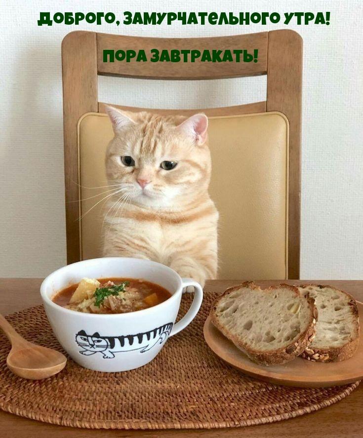 Доброго, замурчательного утра!  Пора завтракать!